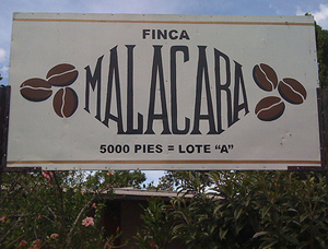 The Finca Malacara A: The Coffee, The Country, The Community
